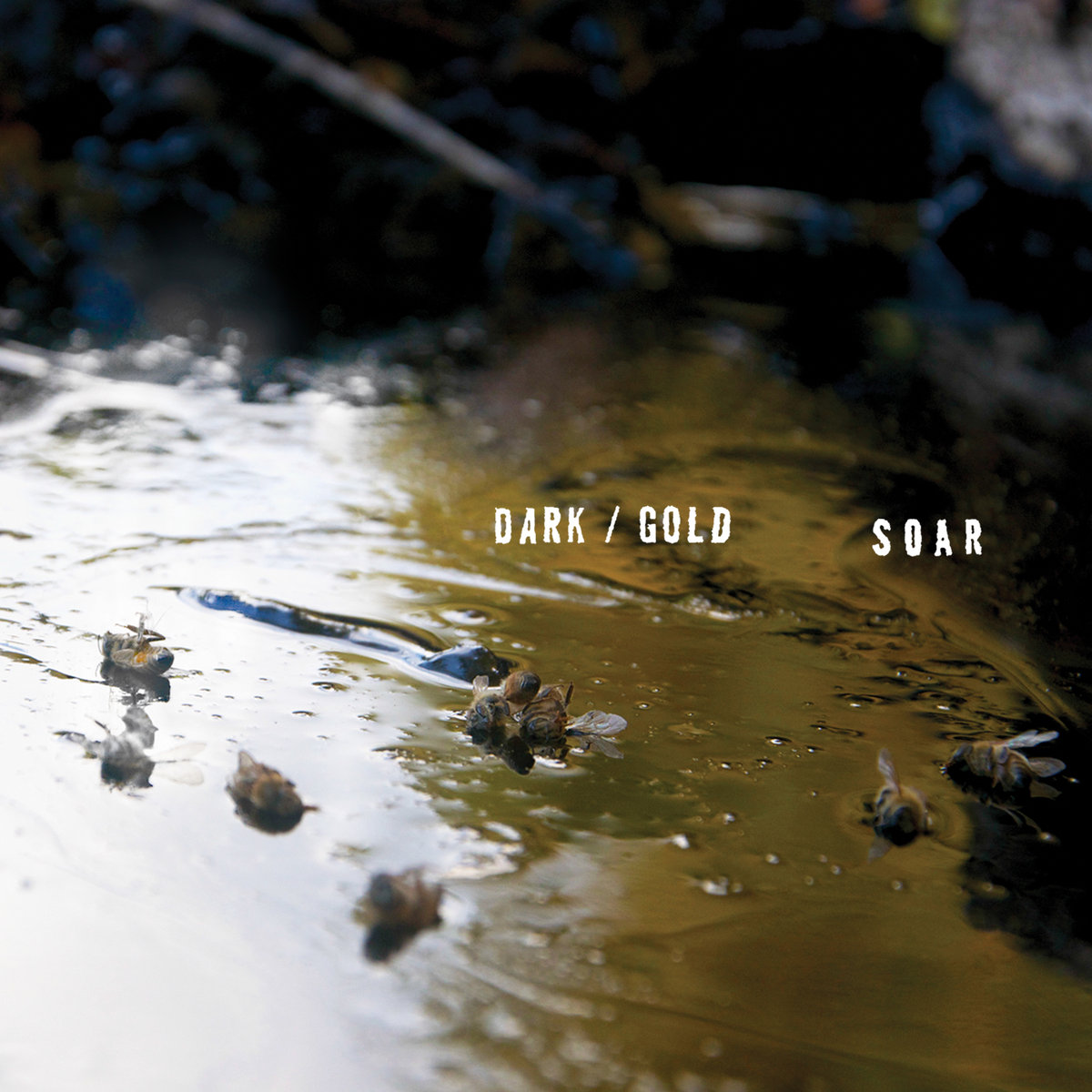 SOAR dark gold album cover